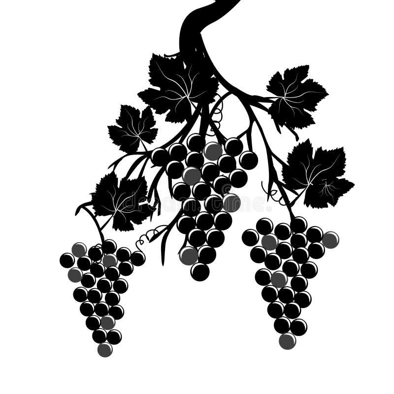 Racimos de la uva en la vid libre illustration