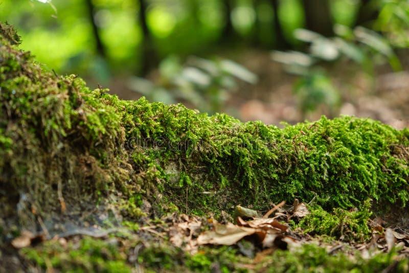 Racine d'arbre couverte de fond de mousse photographie stock