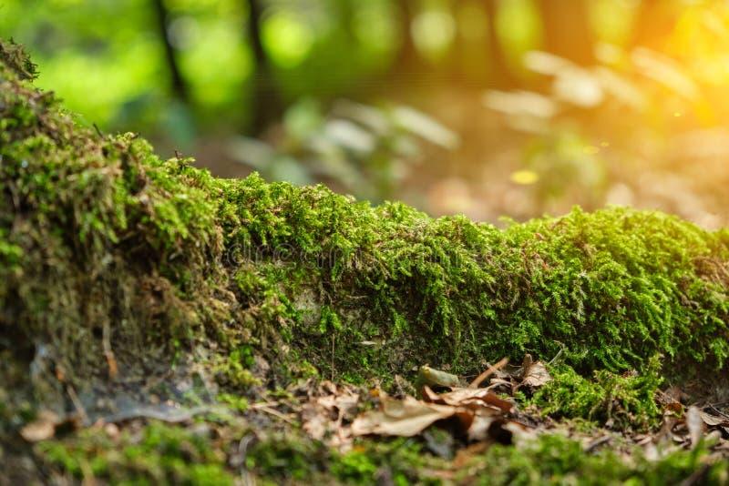 Racine d'arbre couverte de la mousse photographie stock libre de droits