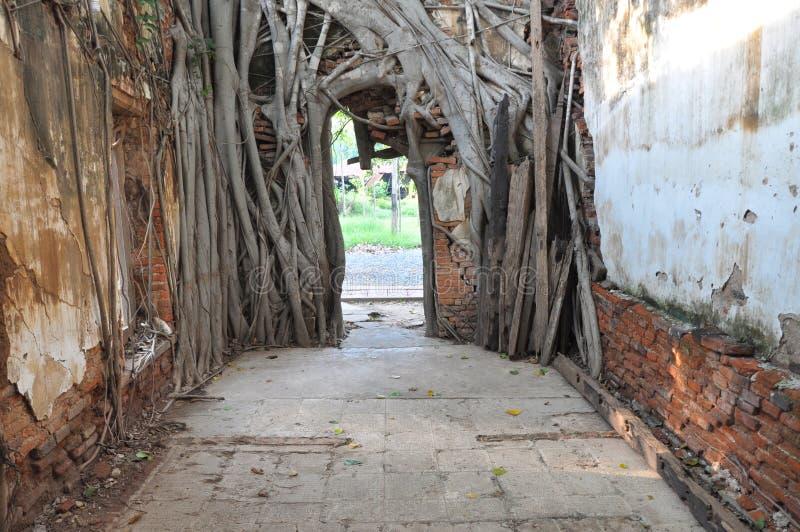 Racine d'arbre de Bodhi la porte images libres de droits