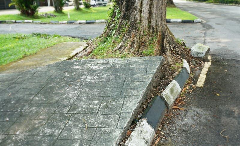 Racine d'arbre endommageant trottoir photos libres de droits