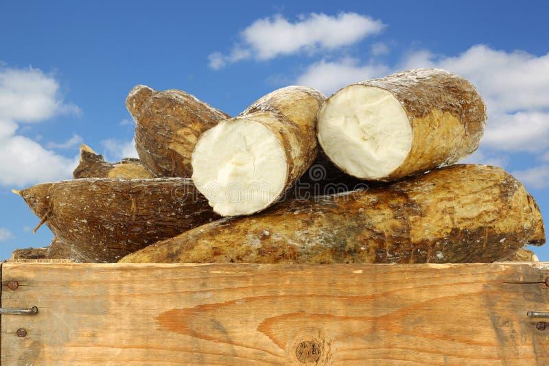 Racine de manioc et quelques morceaux photographie stock