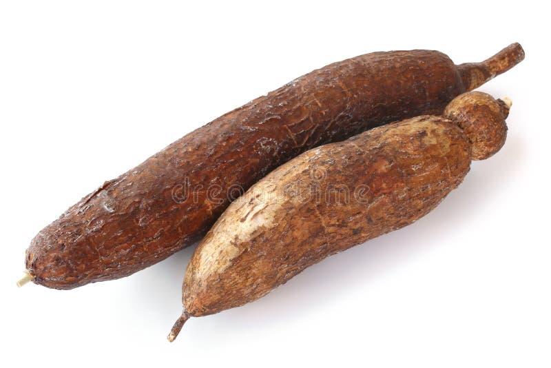 Racine de manioc de Yuca image stock
