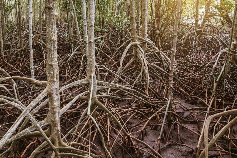 Racines d'arbres images libres de droits