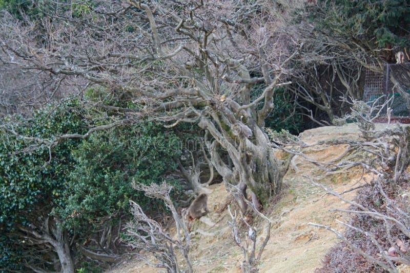 racines d'un arbre sur la surface photo stock