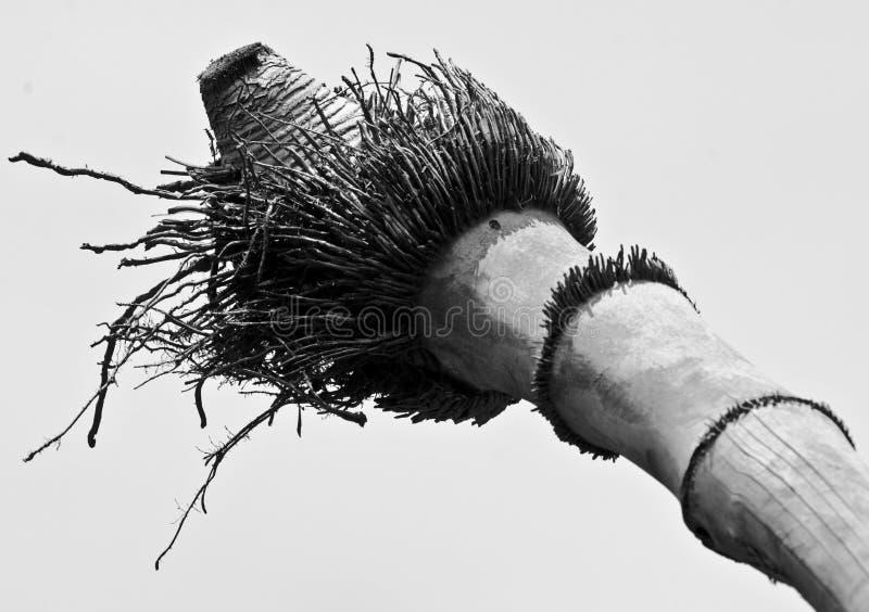 Racines de l'usine en bambou photographie stock
