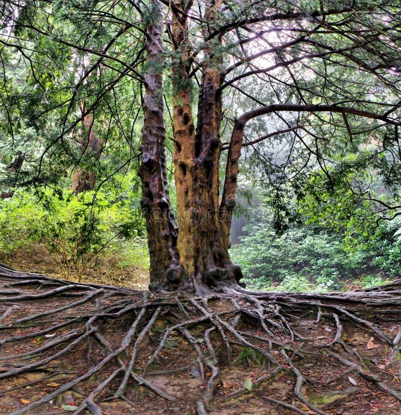 Racines et branches photographie stock libre de droits