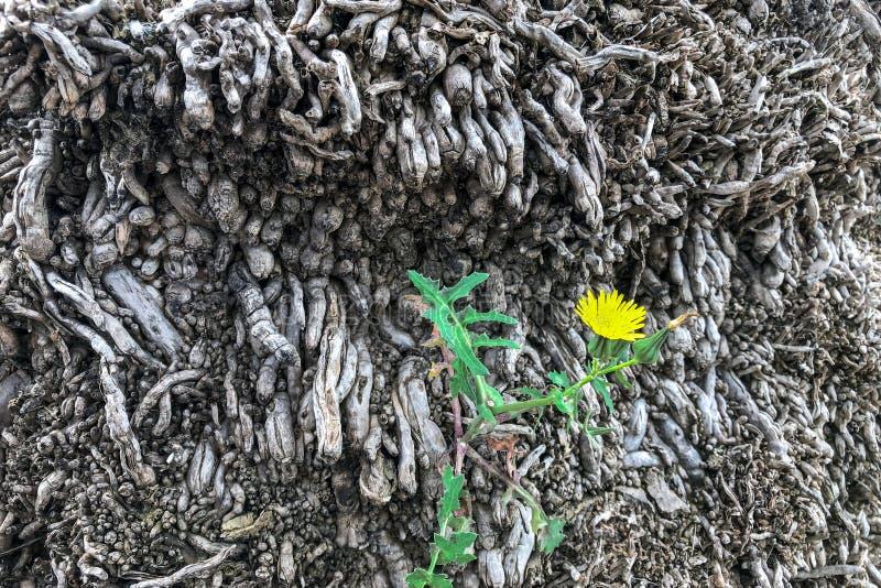 Racines et fleur de paume photographie stock