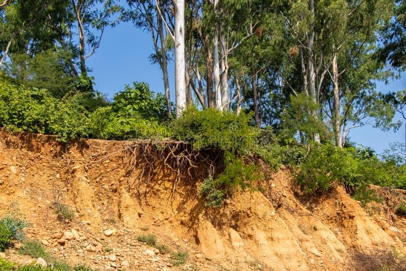 Racines ouvertes d'arbres dues aux éboulements, érosion du sol, après coupe de route image stock
