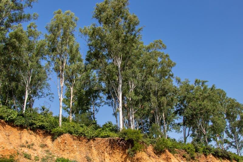 Racines ouvertes d'arbres dues aux éboulements, érosion du sol, après coupe de route photographie stock