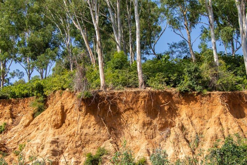 Racines ouvertes d'arbres dues aux éboulements image stock