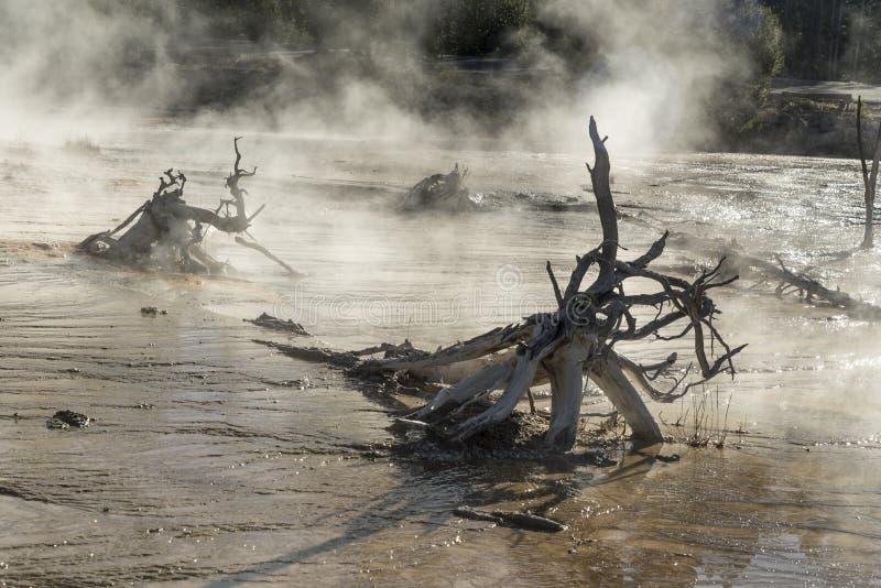 Racines pétrifiées d'arbre dans un courant chaud, parc national de Yellowstone de pot de peinture de fontaine images stock