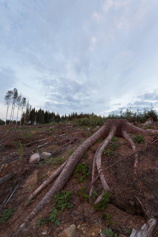 Racines réduites de tronçon d'arbre au secteur de notation photo stock