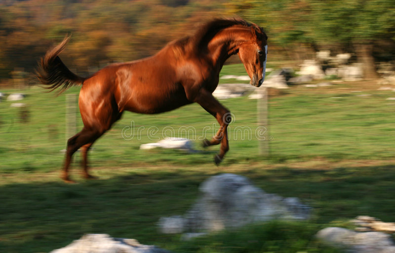Racing horse stock image