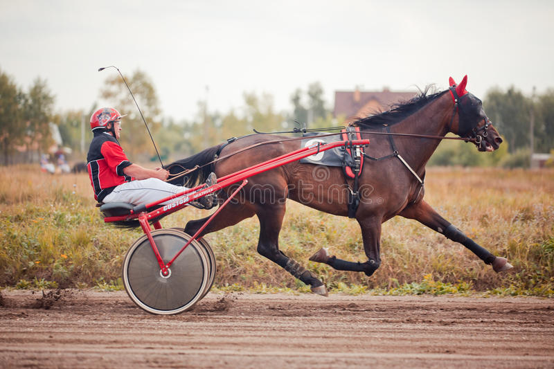 Racing for the horses trotting breeds stock photos