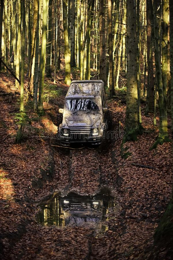 Racing on off-road cars. Dirty offroad car with fall forest on background. SUV covered with mud on path covered with leaves. Reflection of black crossover with royalty free stock images