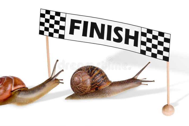 Racing snails royalty free stock images