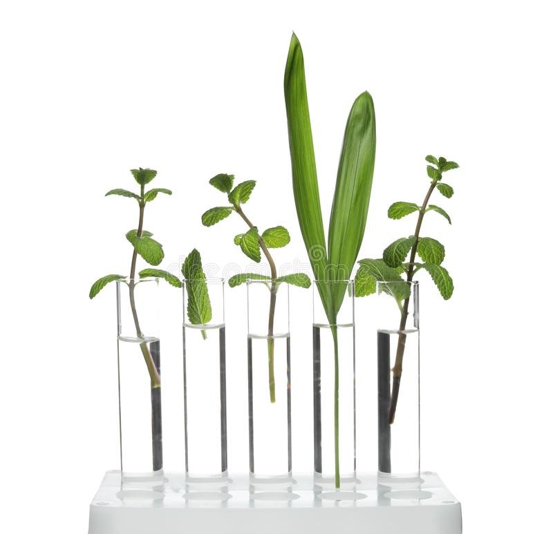 Rack with plants in test tubes isolated on white stock photography