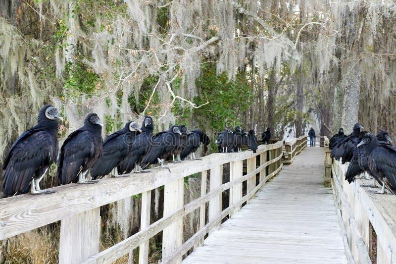 Download Racketeers. Black Vultures. Stock Image - Image: 23064527