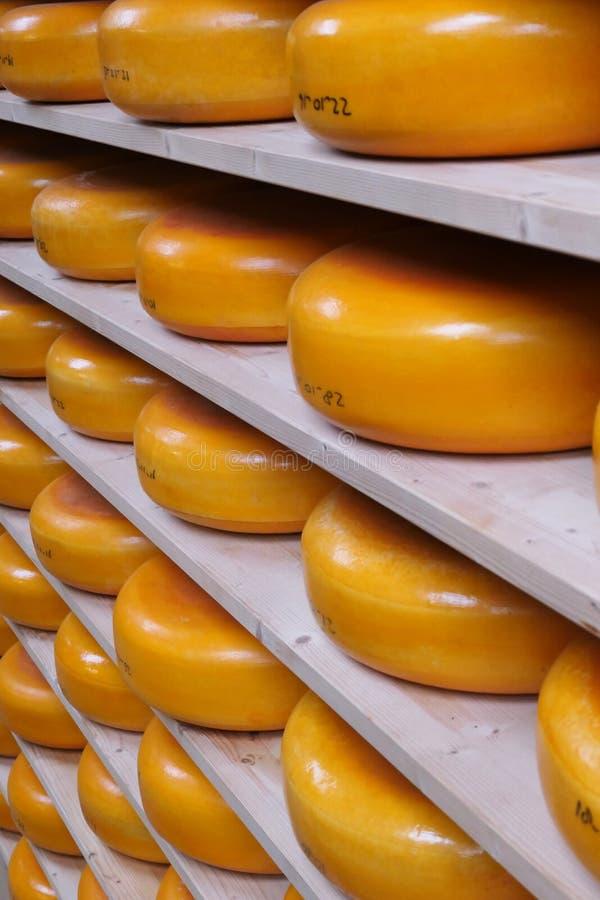 Racks de fromage Edam en maturation image stock