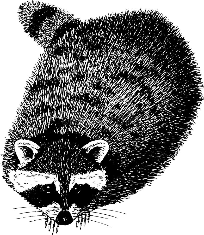racoon ελεύθερη απεικόνιση δικαιώματος