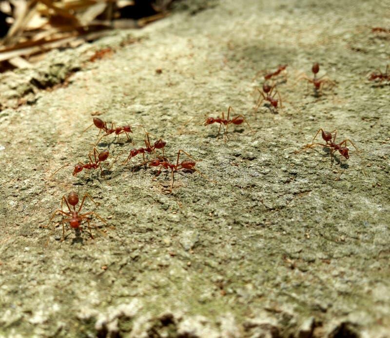 Rad-Ameisentier klein lizenzfreie stockbilder