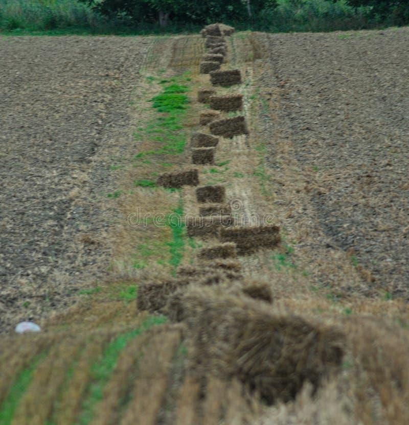 Rad av baler på fält, med åkermark på båda sidor arkivbilder