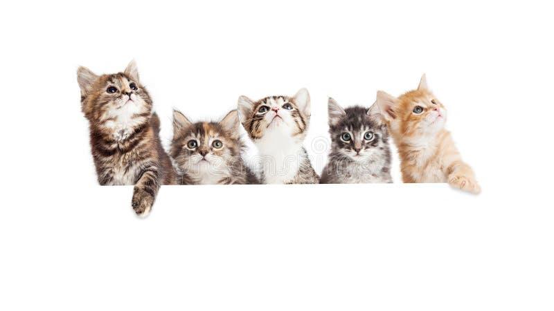 Rad av gulliga kattungar som hänger över det vita banret arkivbilder