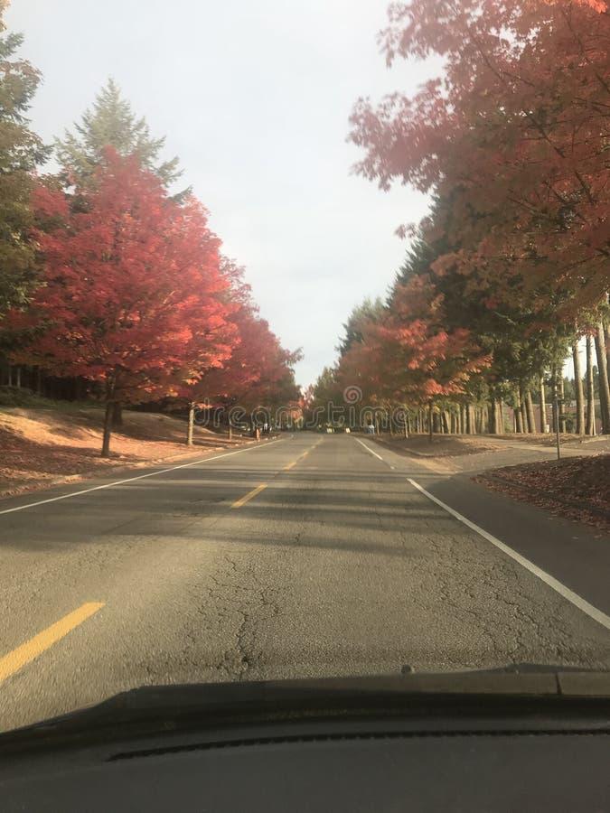 Rad av hösten royaltyfria bilder