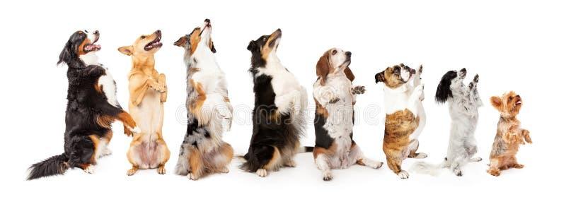 Rad av hundkapplöpning som upp till sitter sidotiggeri royaltyfri bild