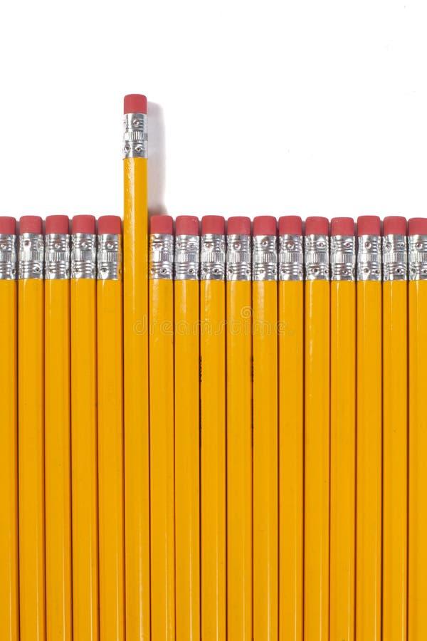 Rad av isolerade gulingblyertspennor royaltyfria bilder