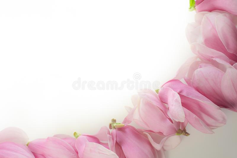 Rad av magnoliablommor royaltyfri bild