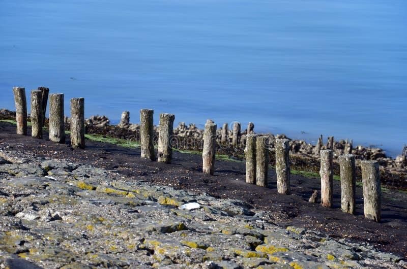 Rad av red ut träpoler på ett dike royaltyfria foton