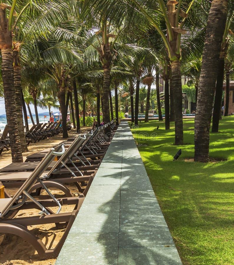Rad av stranddeckchairs under kokosnötpalmträd arkivbild