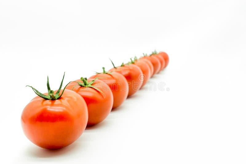 Rad av tomater royaltyfria bilder