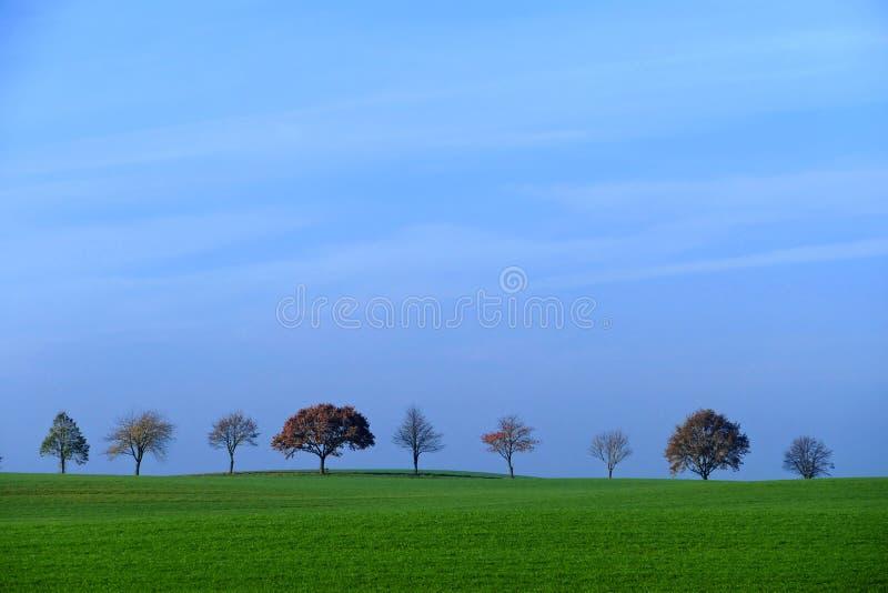 Rad av träd, fält med grönt gräs, blå himmel, kopieringsutrymme royaltyfria bilder