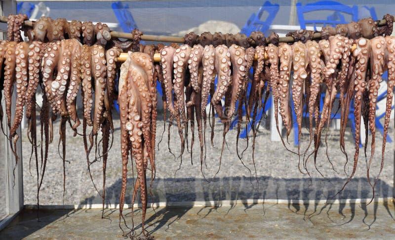 Rad av uttorkningbläckfisken royaltyfri bild