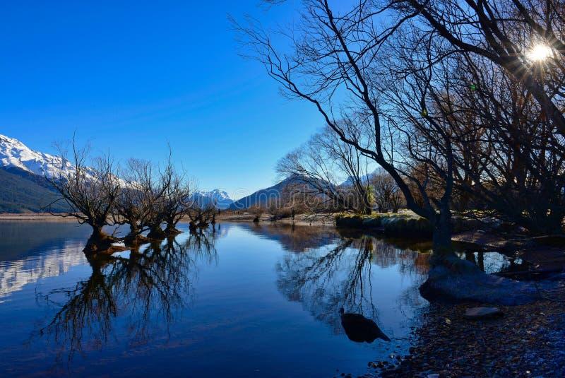 Rad av viden på sjön Wakatipu i Glenorchy royaltyfri fotografi