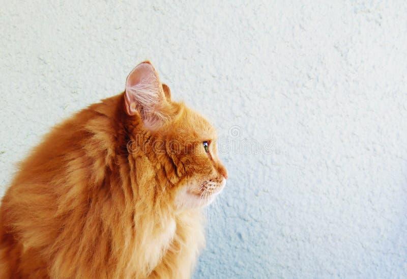 Rad Cat royalty free stock photos