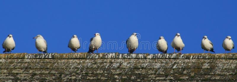 rad för 9 fåglar royaltyfri bild