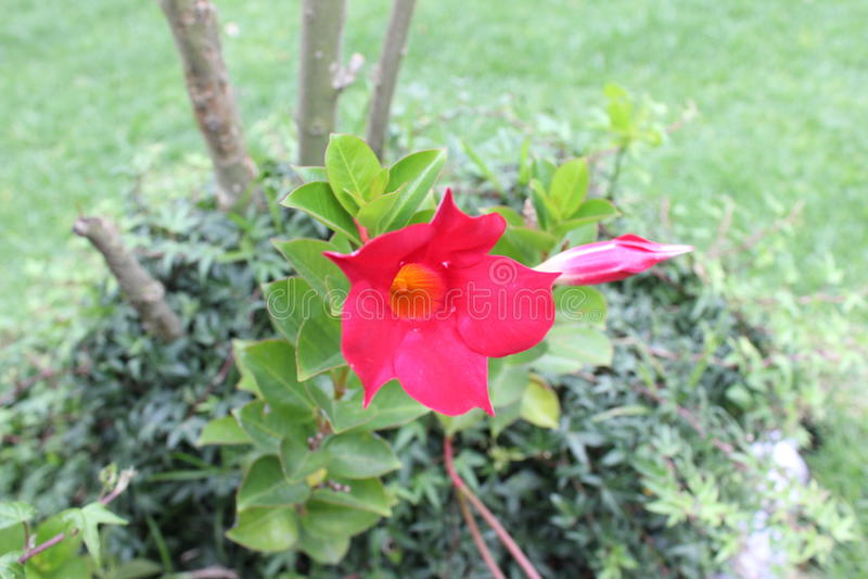 Rad flower stock images