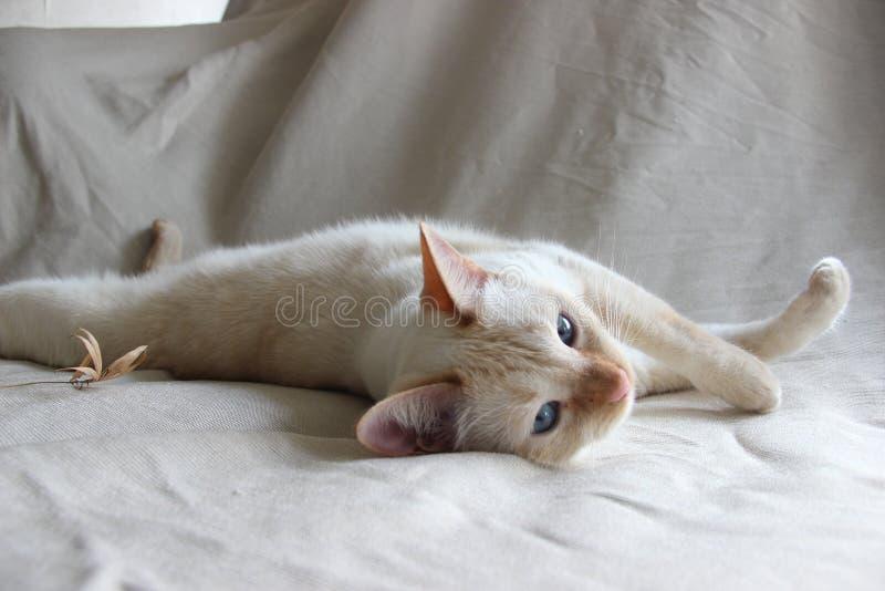 Rad Point Cat stock photos