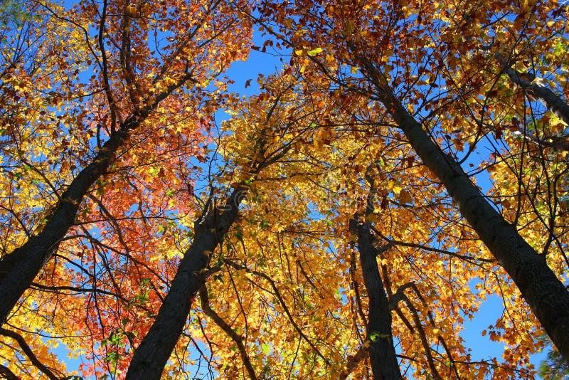 Rada drzewa zdjęcia royalty free