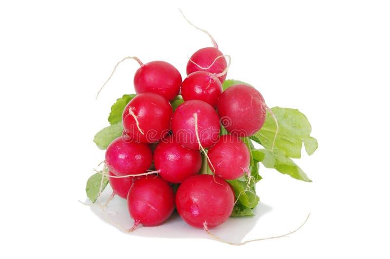 Raddish rouge images stock
