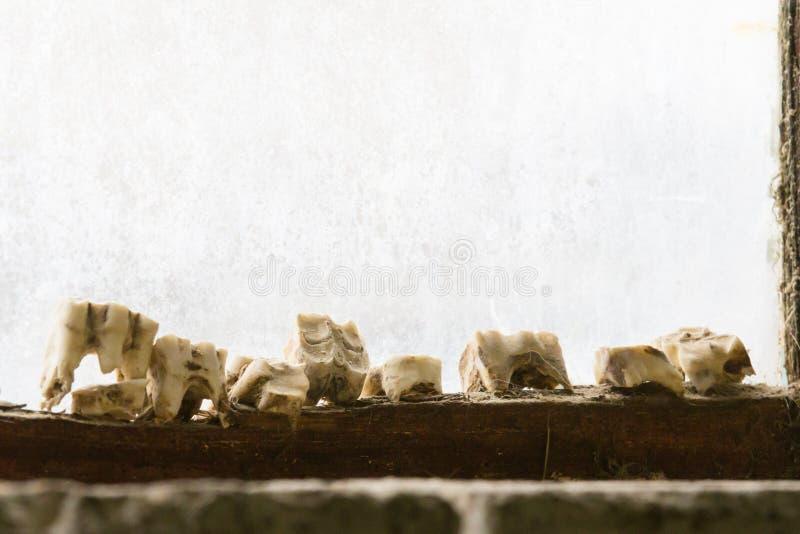 Raden av kotänder på en fönsteravsats beskådade från inre ett fönster arkivfoto