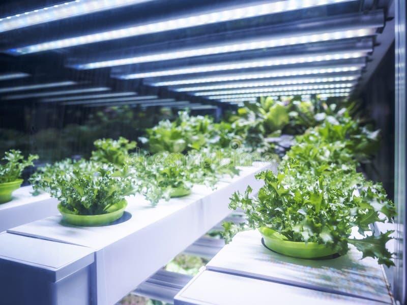 Raden för växthusväxten växer med LETT ljust inomhus lantgårdjordbruk royaltyfria foton