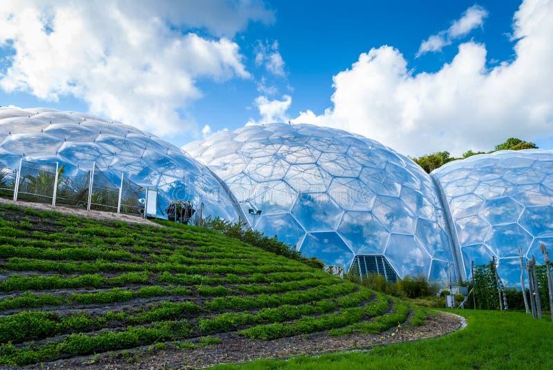 Rader av grönt gräs med växelverkande turist- biodomes på bacen royaltyfria foton