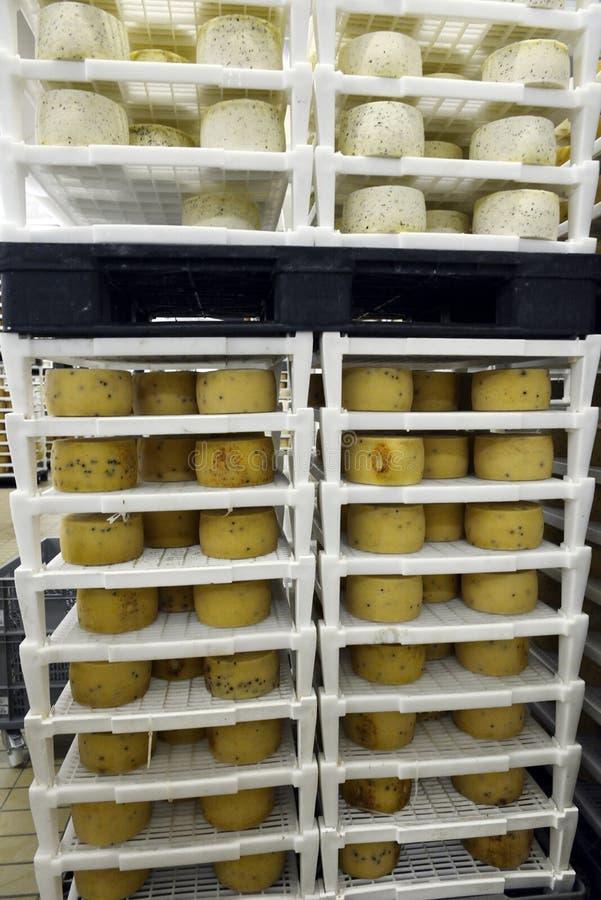 Rader av ost arkivfoton