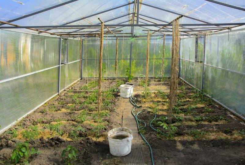 Rader av tomatväxter, peppar och gurkor som växer inom en la arkivbild