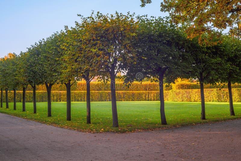 Rader av träd i det så kallad royaltyfri fotografi